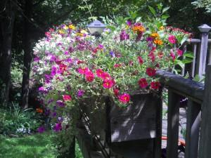 Aug Flower Box